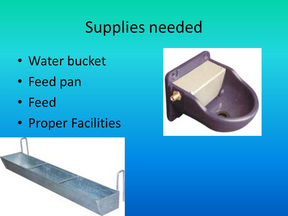 Supplies needed Water bucket Feed pan Feed Proper Facilities