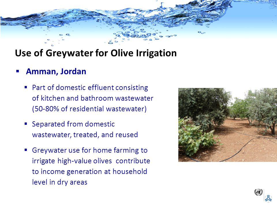 Use of Greywater for Olive Irrigation  Amman, Jordan  Part of domestic effluent consisting of kitchen and bathroom wastewater (50-80% of residential wastewater)  Separated from domestic wastewater, treated, and reused  Greywater use for home farming to irrigate high-value olives contribute to income generation at household level in dry areas