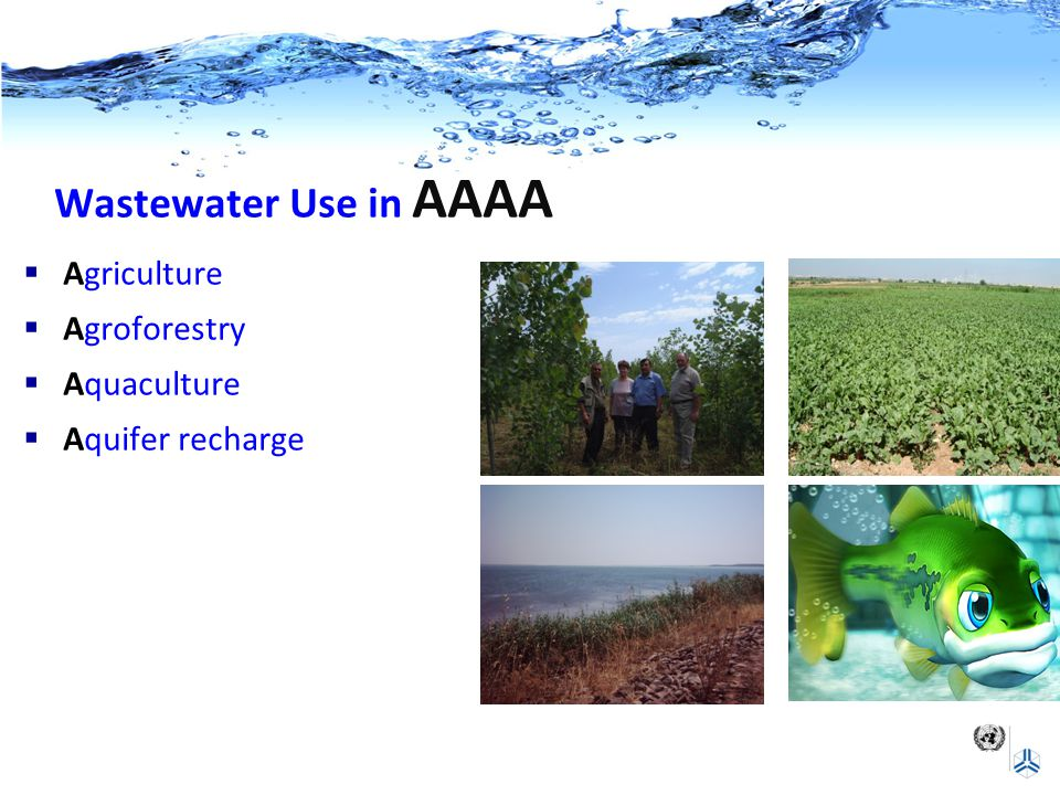 Wastewater Use in AAAA  Agriculture  Agroforestry  Aquaculture  Aquifer recharge