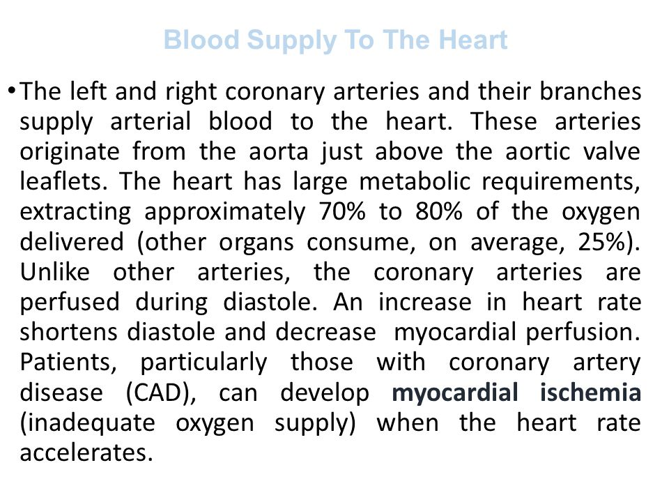 Blood Supply To The Heart The left and right coronary arteries and their branches supply arterial blood to the heart. These arteries originate from th