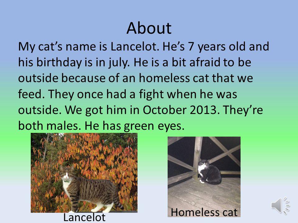 My pet Lancelot