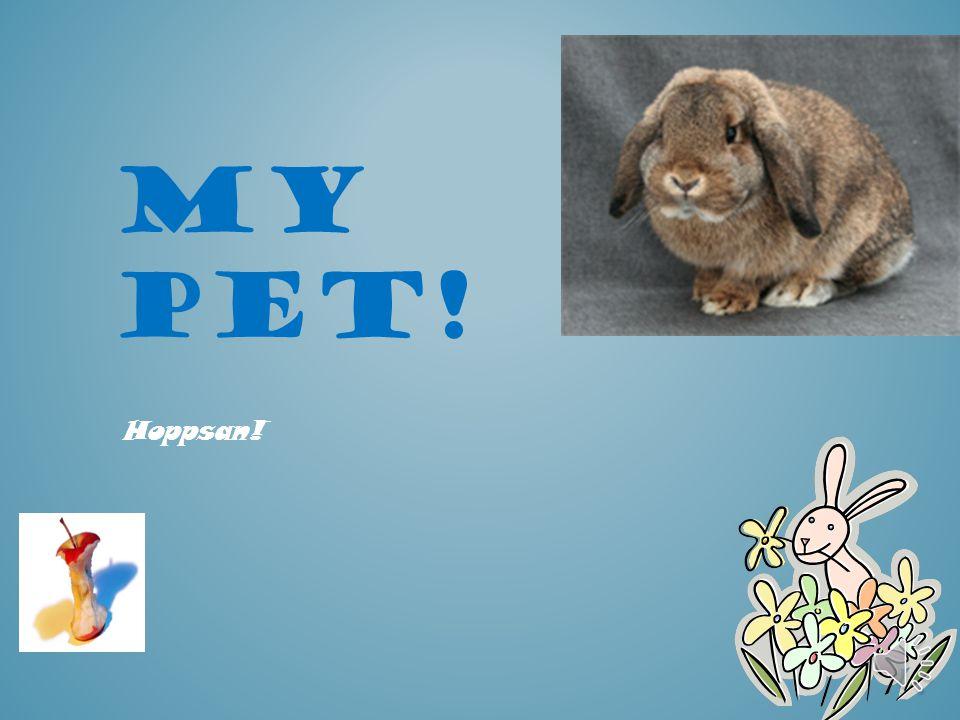 When i got him  I got Benny from a bunny farm cald Kolartorpet..  Hi was the cutest bunny I ever seen..