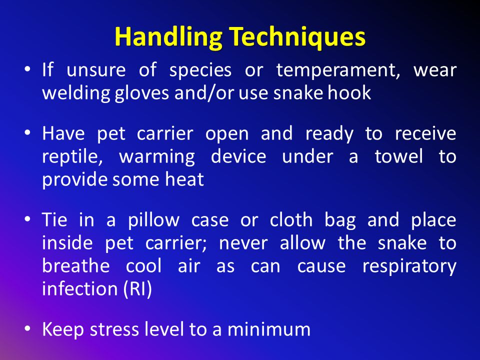 Handling Techniques If unsure of species or temperament, wear welding gloves and/or use snake hook Have pet carrier open and ready to receive reptile, warming device under a towel to provide some heat Tie in a pillow case or cloth bag and place inside pet carrier; never allow the snake to breathe cool air as can cause respiratory infection (RI) Keep stress level to a minimum