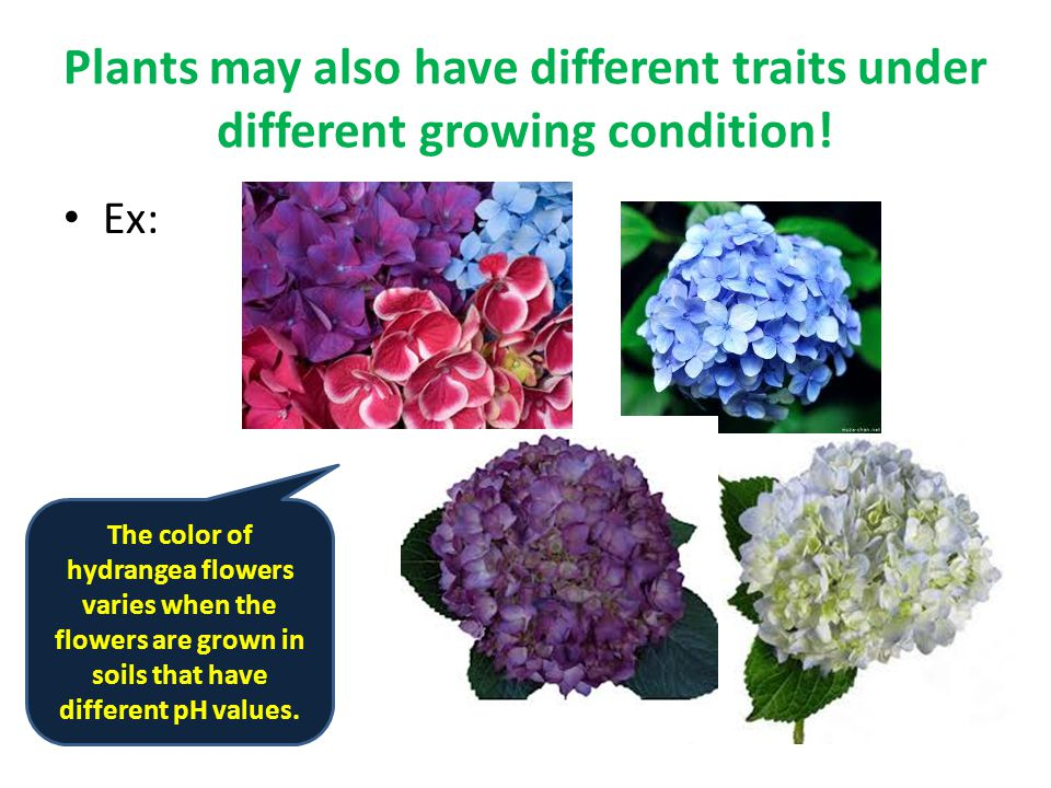 Plants may also have different traits under different growing condition.