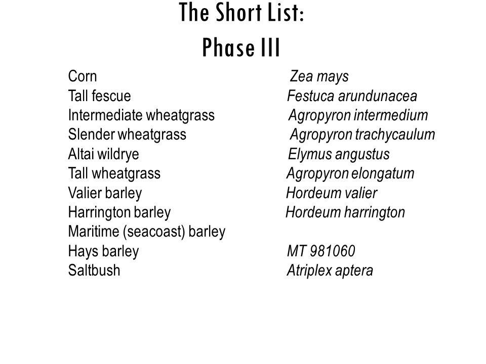The Short List: Phase III Corn Zea mays Tall fescue Festuca arundunacea Intermediate wheatgrass Agropyron intermedium Slender wheatgrass Agropyron tra