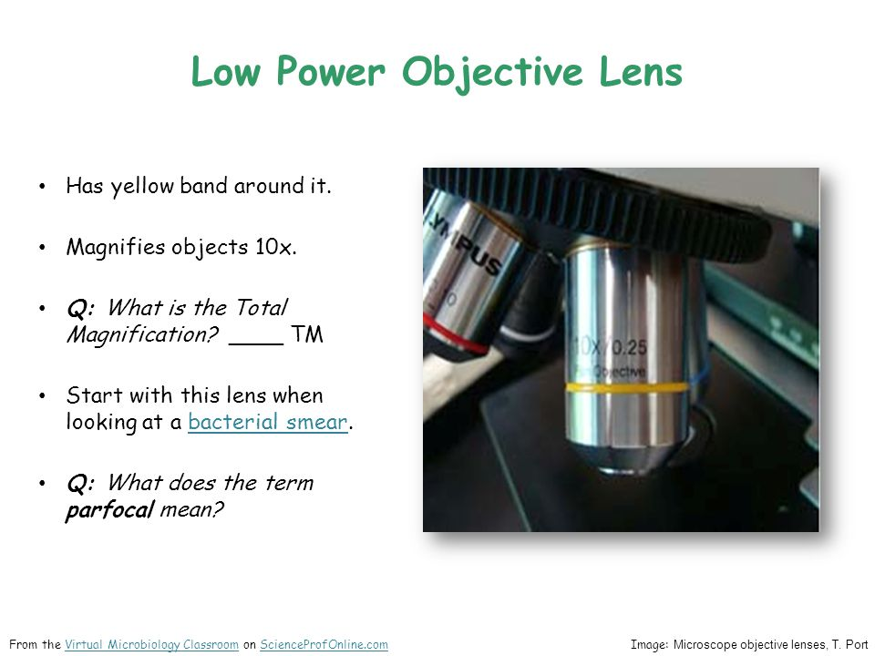 Low Power Objective Lens Has yellow band around it. Magnifies objects 10x. Q: What is the Total Magnification? ____ TM Start with this lens when looki