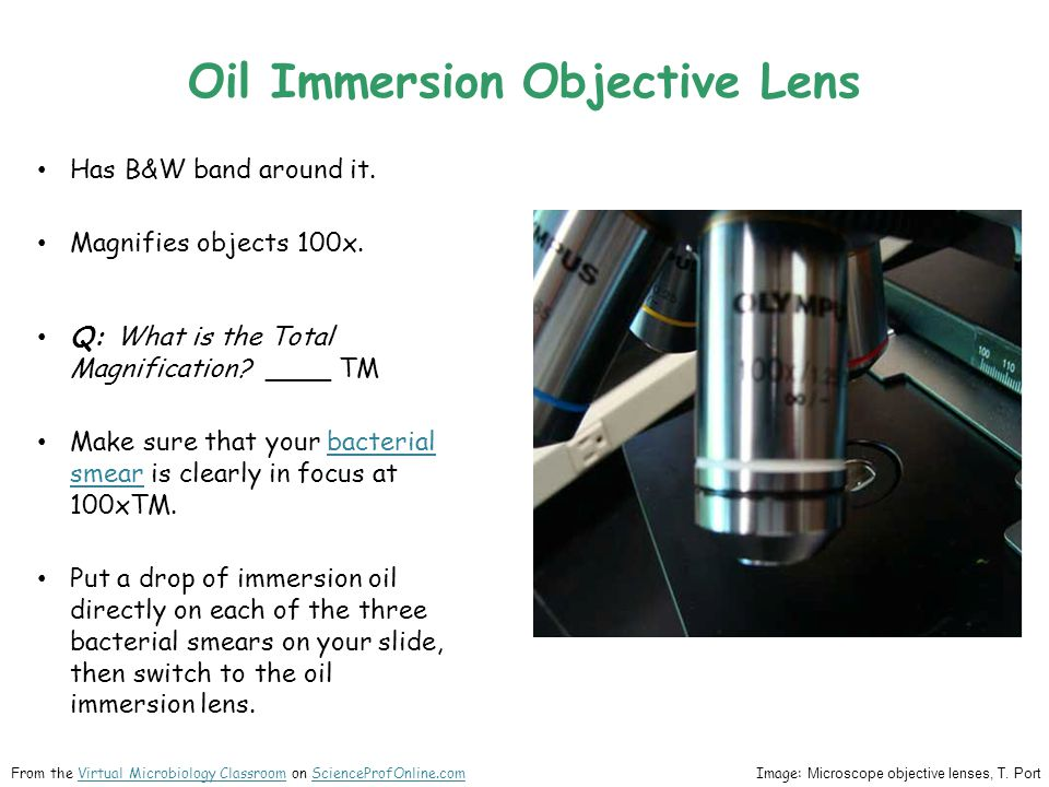 Oil Immersion Objective Lens Has B&W band around it. Magnifies objects 100x. Q: What is the Total Magnification? ____ TM Make sure that your bacterial