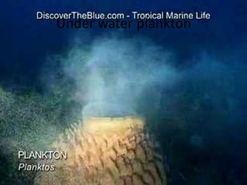 Under water plankton