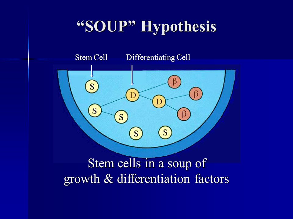 SOUP Hypothesis Stem cells in a soup of growth & differentiation factors Stem Cell Differentiating Cell