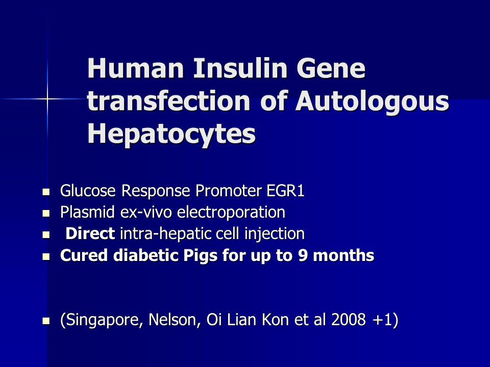 Human Insulin Gene transfection of Autologous Hepatocytes Glucose Response Promoter EGR1 Glucose Response Promoter EGR1 Plasmid ex-vivo electroporatio