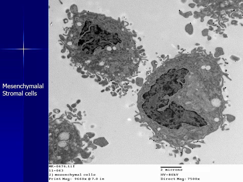 Mesenchymalal Stromal cells
