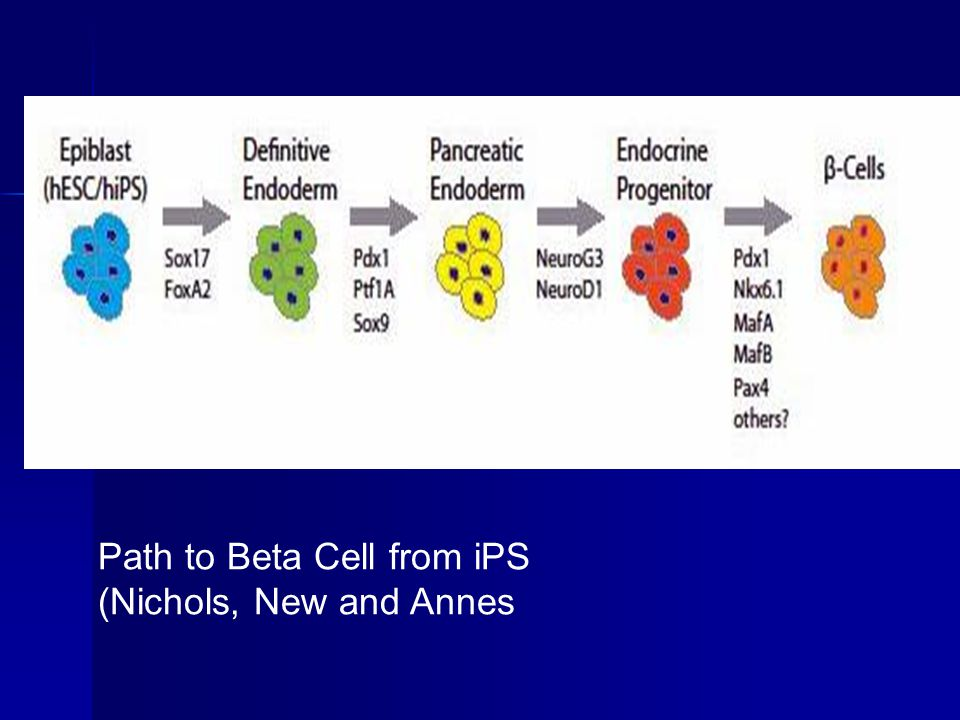 Path to Beta Cell from iPS (Nichols, New and Annes