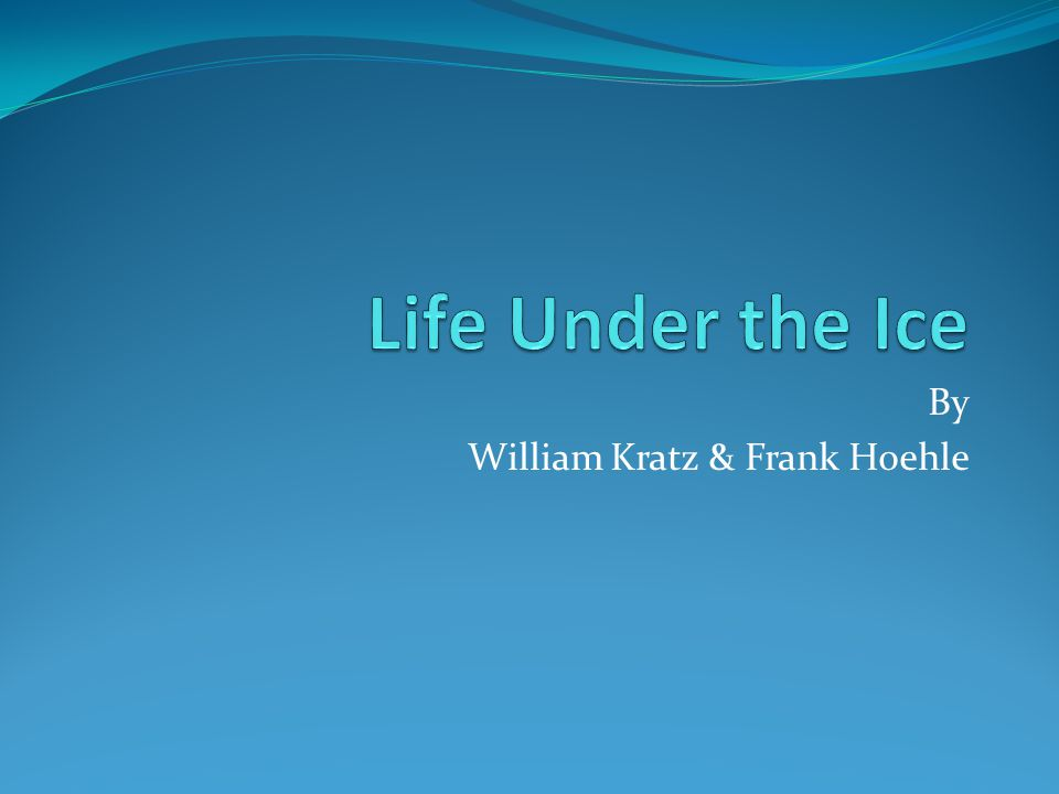 By William Kratz & Frank Hoehle