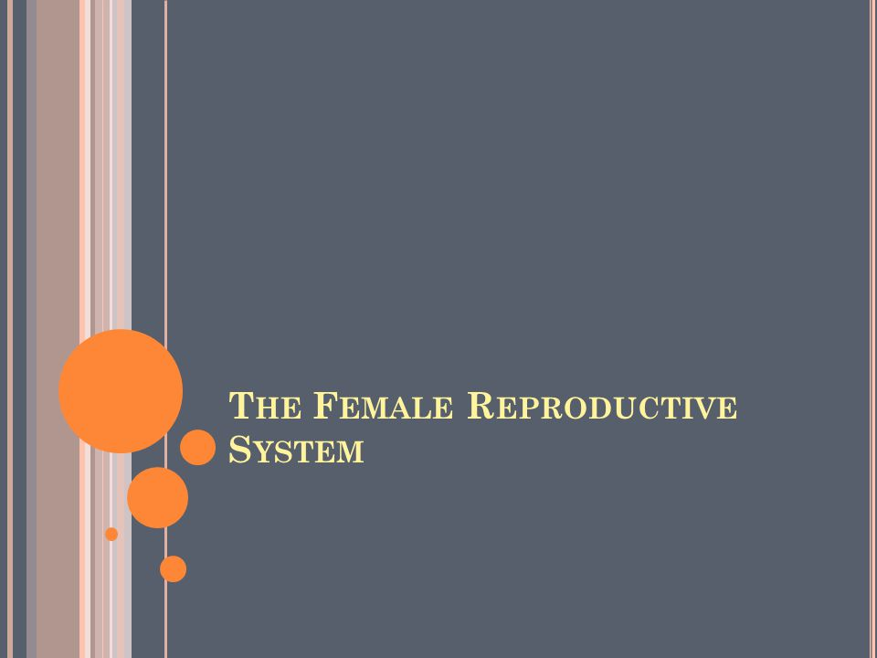 Unlike the male, the human female has a reproductive system located entirely inside the pelvis