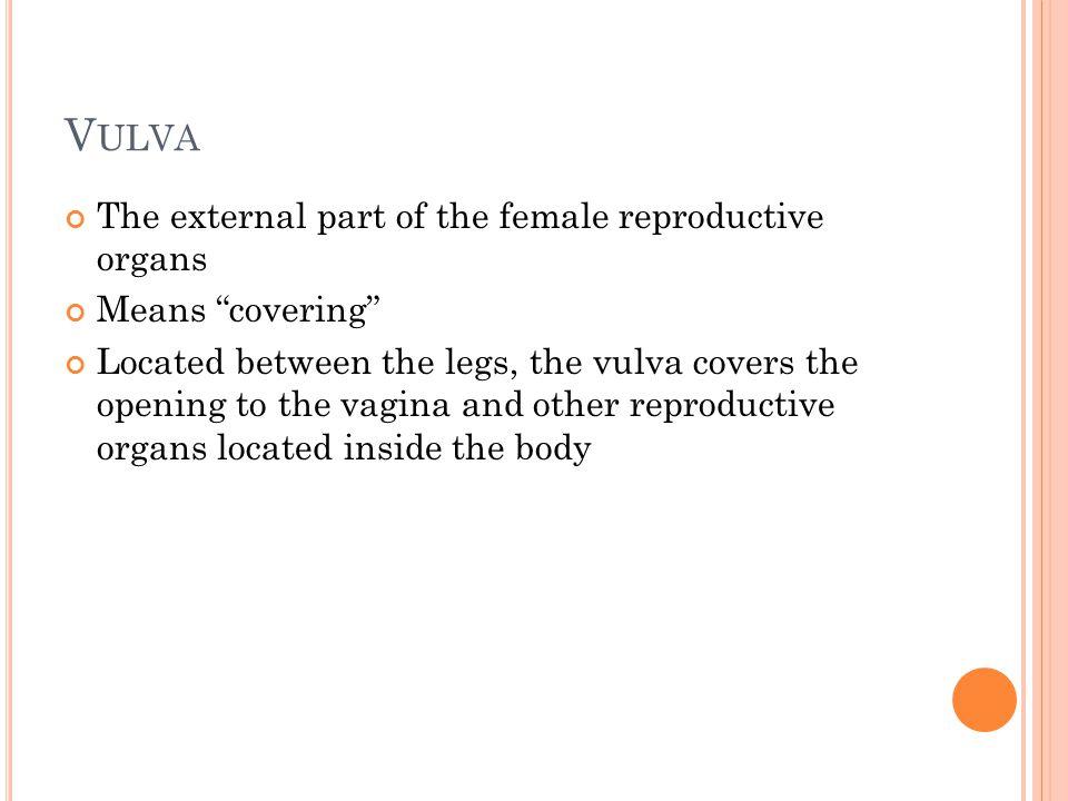 V ULVA Vulva