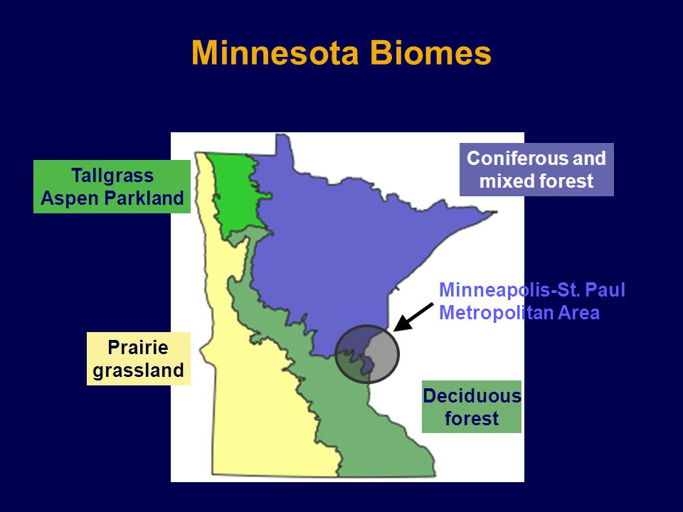 Minnesota Biomes Coniferous and mixed forest Tallgrass Aspen Parkland Prairie grassland Deciduous forest Minneapolis-St.