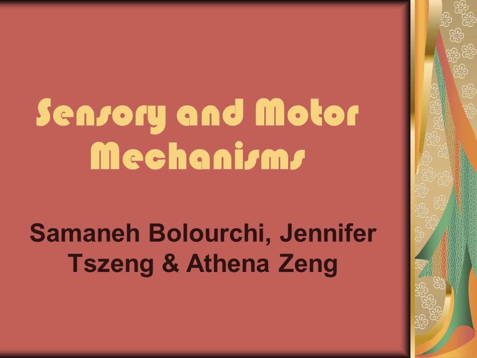 Sensory and Motor Mechanisms Samaneh Bolourchi, Jennifer Tszeng & Athena Zeng
