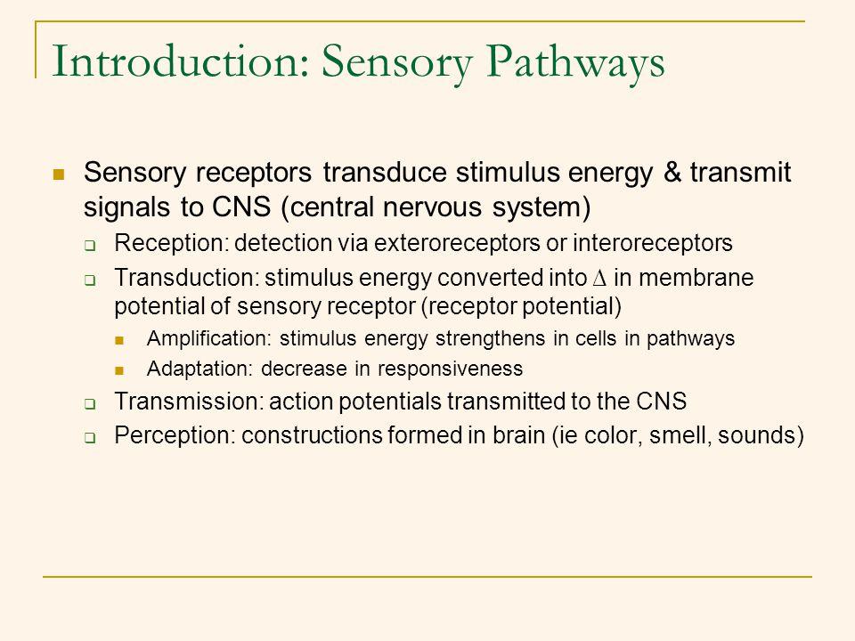 Introduction: Sensory Pathways Sensory receptors transduce stimulus energy & transmit signals to CNS (central nervous system)  Reception: detection v