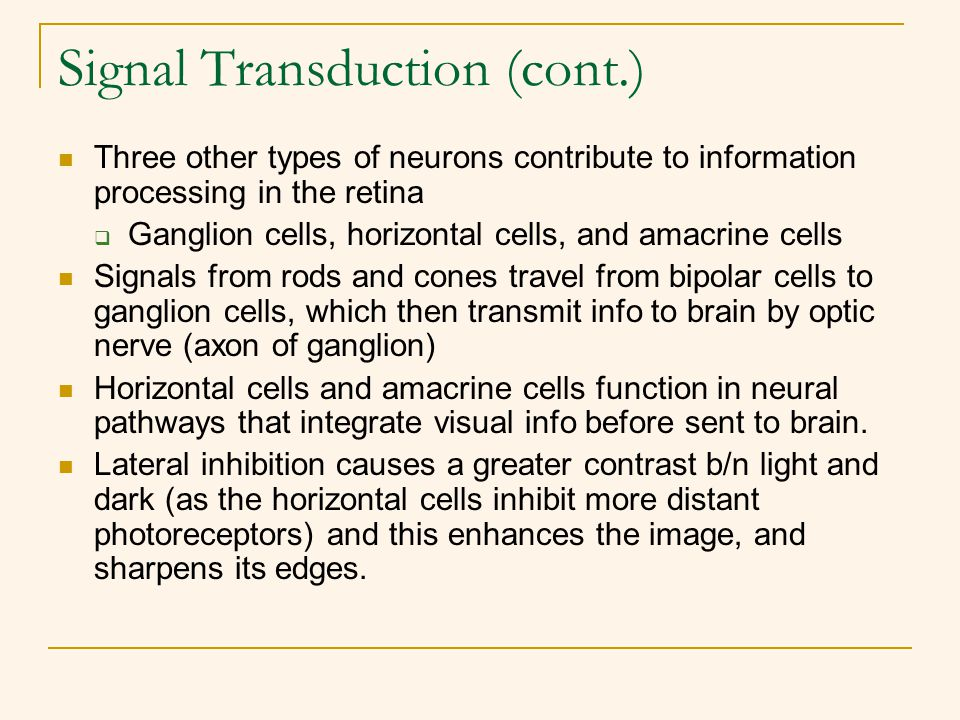 Signal Transduction (cont.) Three other types of neurons contribute to information processing in the retina  Ganglion cells, horizontal cells, and am