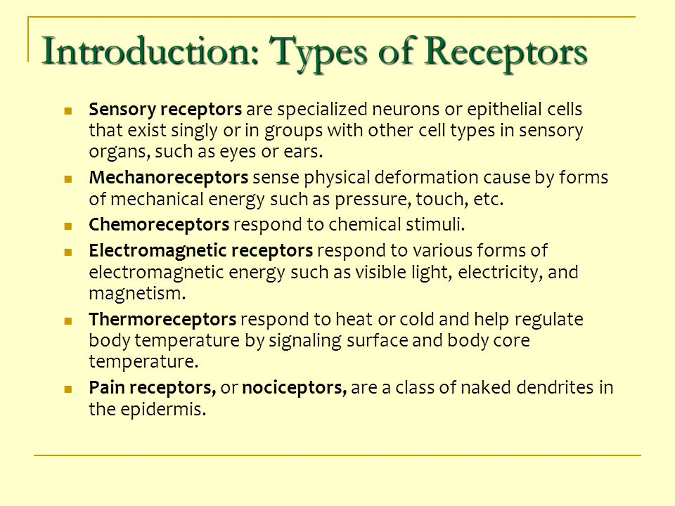 Mechanoreceptors Detect mechanical energy typically consist of ion channels linked to external cell structures (ie hairs) & internal structures (ie cytoskeleton) Bending/stretching plasma membrane changes permeability to sodium & potassium ions Type of mechanoreceptor varies greatly between organisms  Crustaceans - vertebrate stretch receptors  Mammals - dendrites of sensory neurons