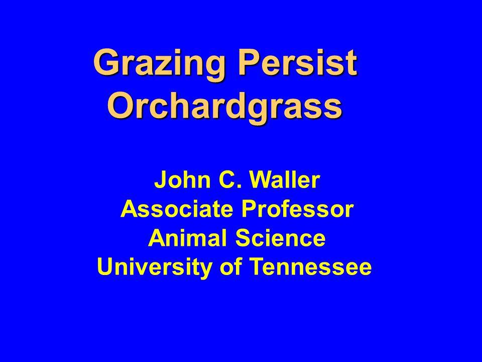 Grazing Persist Orchardgrass John C.