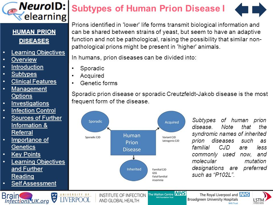 HUMAN PRION DISEASES Learning Objectives Overview Introduction Subtypes Clinical Features Management OptionsManagement Options Investigations Infection Control Sources of Further Information & ReferralSources of Further Information & Referral Importance of GeneticsImportance of Genetics Key Points Learning Objectives and Further ReadingLearning Objectives and Further Reading Self Assessment Available Investigations to Assist in Making a Diagnosis of Human Prion Disease II CT Scans CT brain scans are usually only helpful in excluding alternative causes of cognitive decline/reduced mobility early on in diagnostic process (e.g.