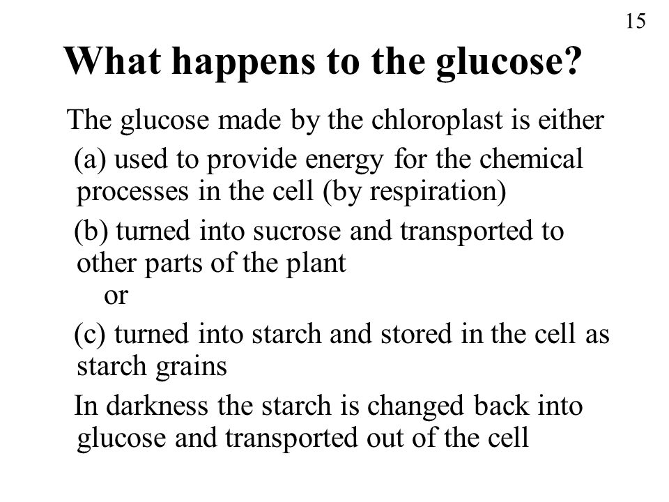 What happens to the glucose? The glucose made by the chloroplast is either (a) used to provide energy for the chemical processes in the cell (by respi