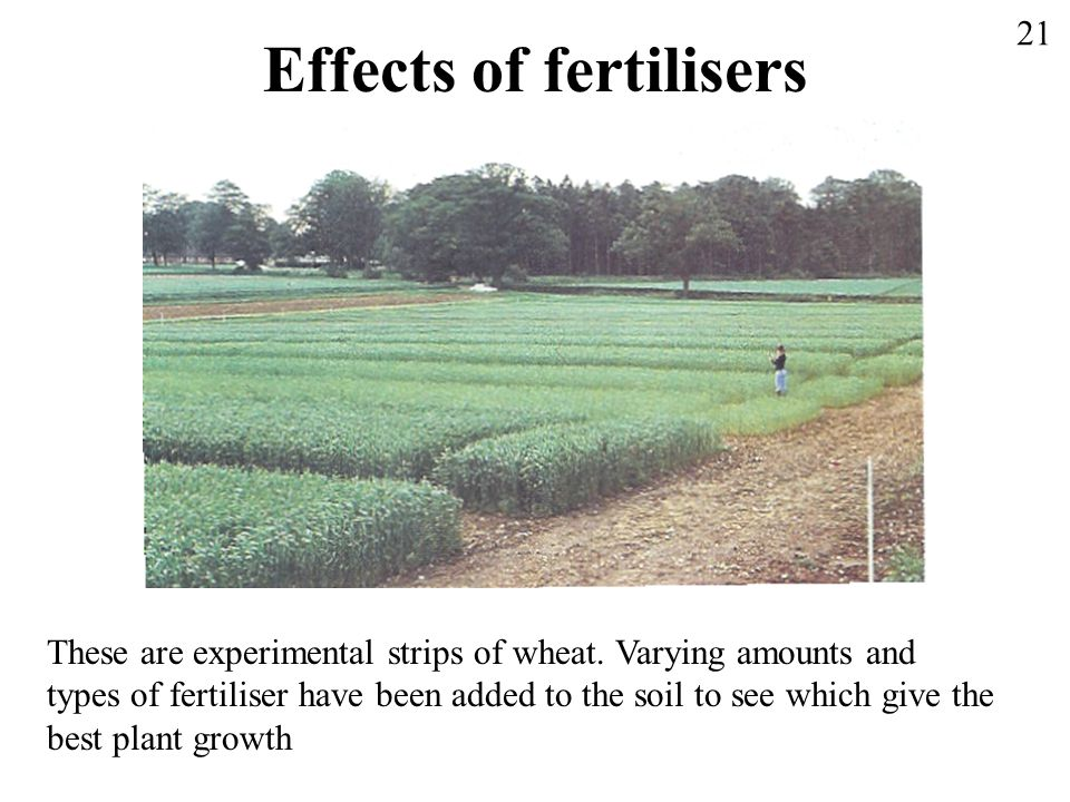 Effects of fertilisers These are experimental strips of wheat. Varying amounts and types of fertiliser have been added to the soil to see which give t