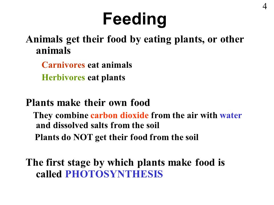 Feeding Animals get their food by eating plants, or other animals Carnivores eat animals Herbivores eat plants Plants make their own food They combine