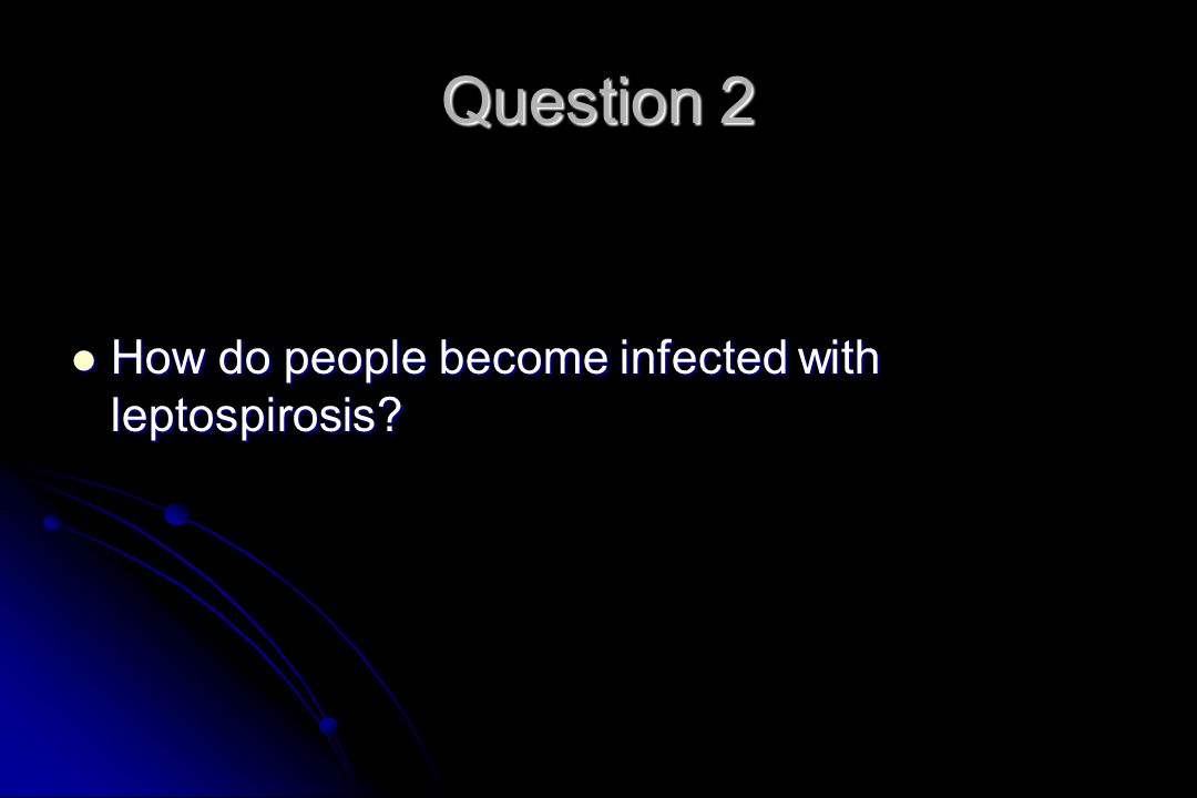Question 2 How do people become infected with leptospirosis.