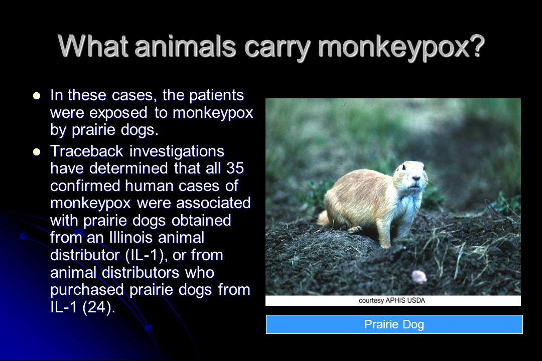 What animals carry monkeypox.