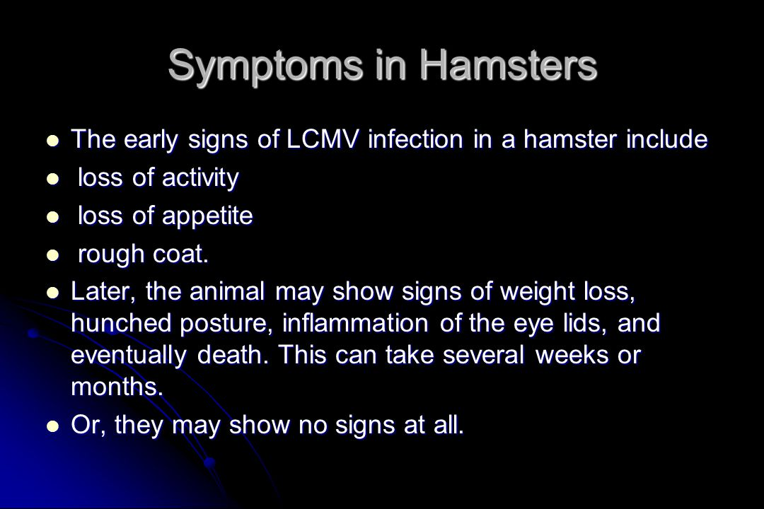 Symptoms in Hamsters The early signs of LCMV infection in a hamster include The early signs of LCMV infection in a hamster include loss of activity loss of activity loss of appetite loss of appetite rough coat.