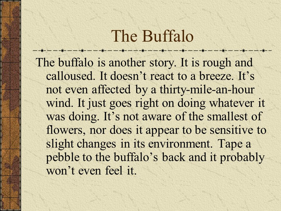 The Buffalo The buffalo is another story. It is rough and calloused.
