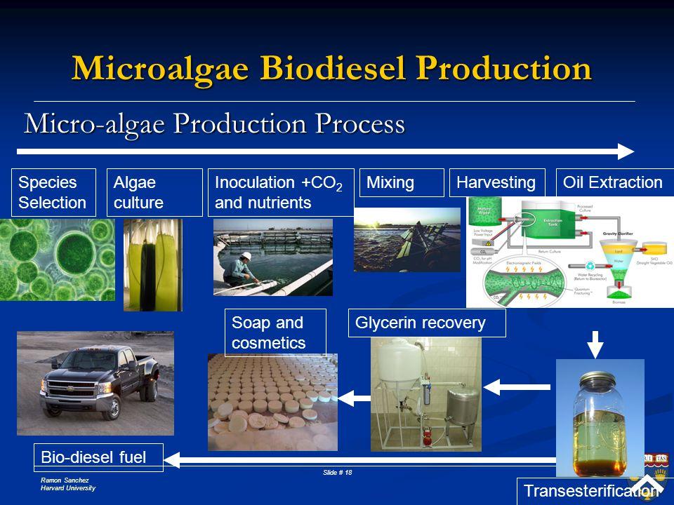 Ramon Sanchez Harvard University Slide # 18 Micro-algae Production Process Microalgae Biodiesel Production Species Selection Algae culture MixingInocu