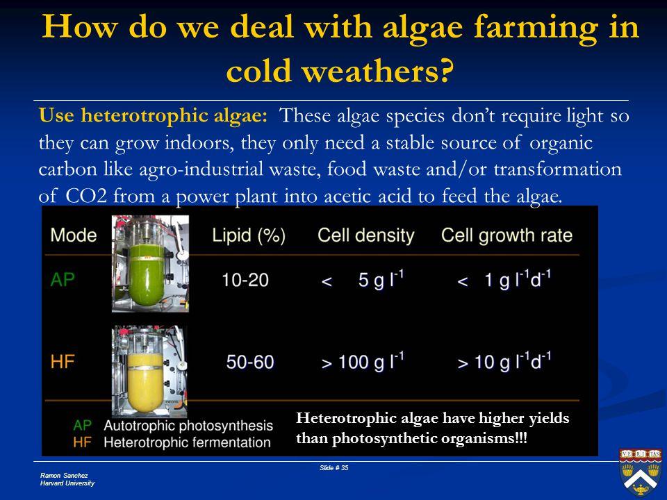 Ramon Sanchez Harvard University Slide # 35 How do we deal with algae farming in cold weathers? Use heterotrophic algae: These algae species don't req