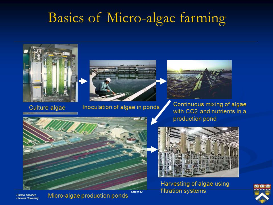 Ramon Sanchez Harvard University Slide # 53 Culture algae Inoculation of algae in ponds Continuous mixing of algae with CO2 and nutrients in a product