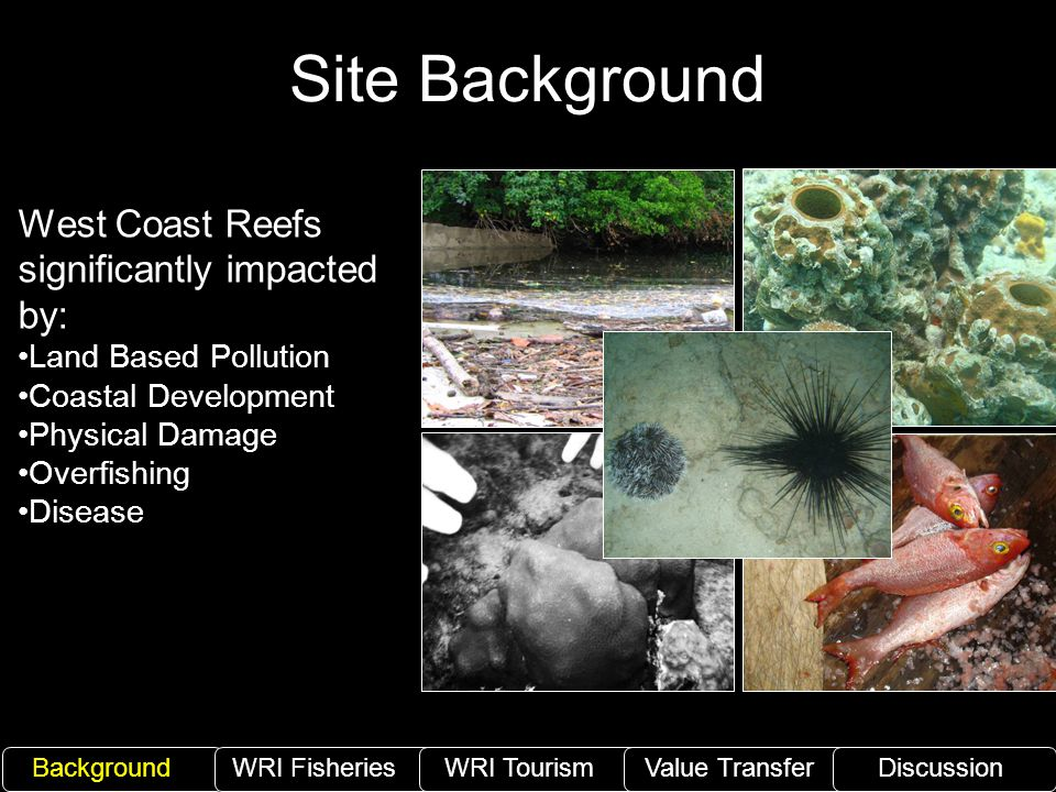 Site Background West Coast Reefs significantly impacted by: Land Based Pollution Coastal Development Physical Damage Overfishing Disease BackgroundWRI