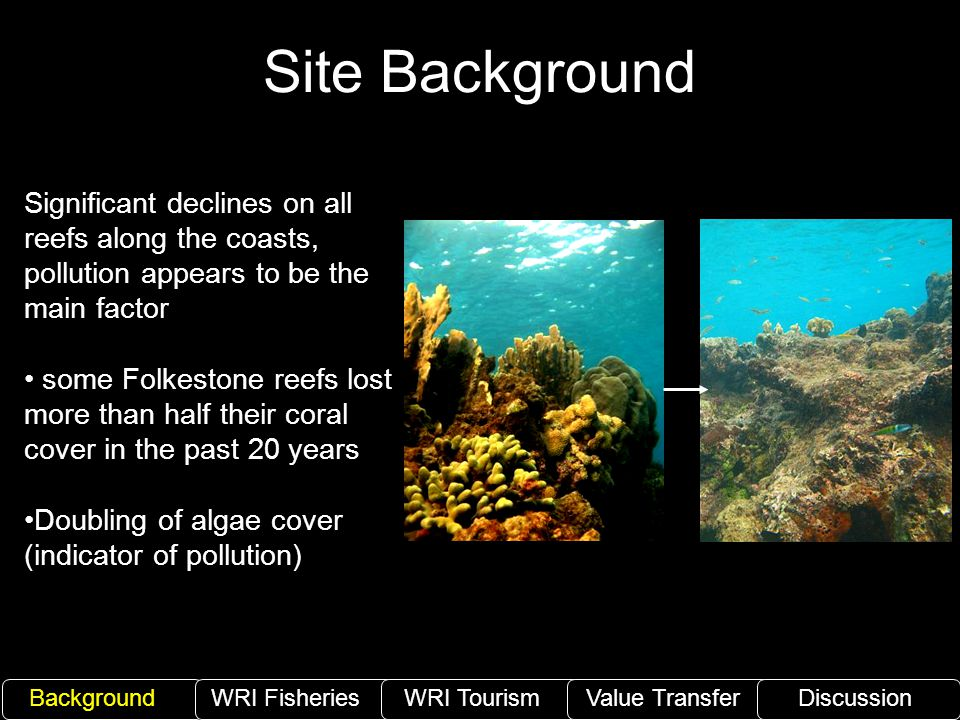 Site Background Significant declines on all reefs along the coasts, pollution appears to be the main factor some Folkestone reefs lost more than half