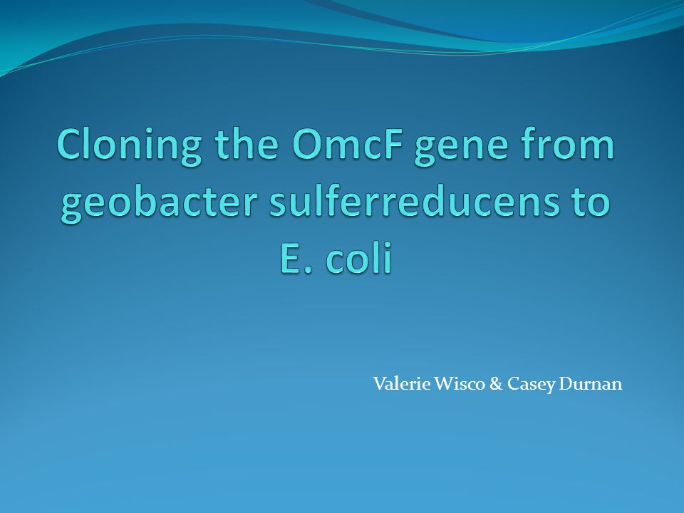 General Background Organism: Geobacter sulferreducens have the ability to transfer electrons on to the surface of electrodes creating a pass of electricity Useful in potential bioreactors Gene of Interest: OmcF Outer membrane f-type cytochrome Regulates the transcription of other Omc genes that play a role in current production Removing the omcF inhibits electron transfer, reducing electricity production