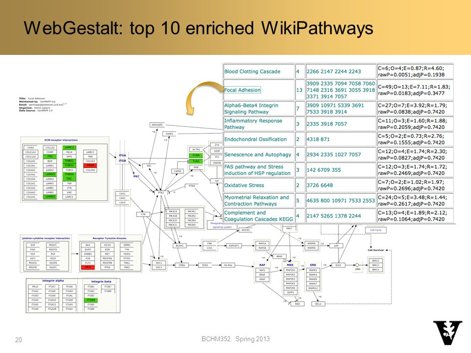 WebGestalt: top 10 enriched WikiPathways 20 BCHM352, Spring 2013