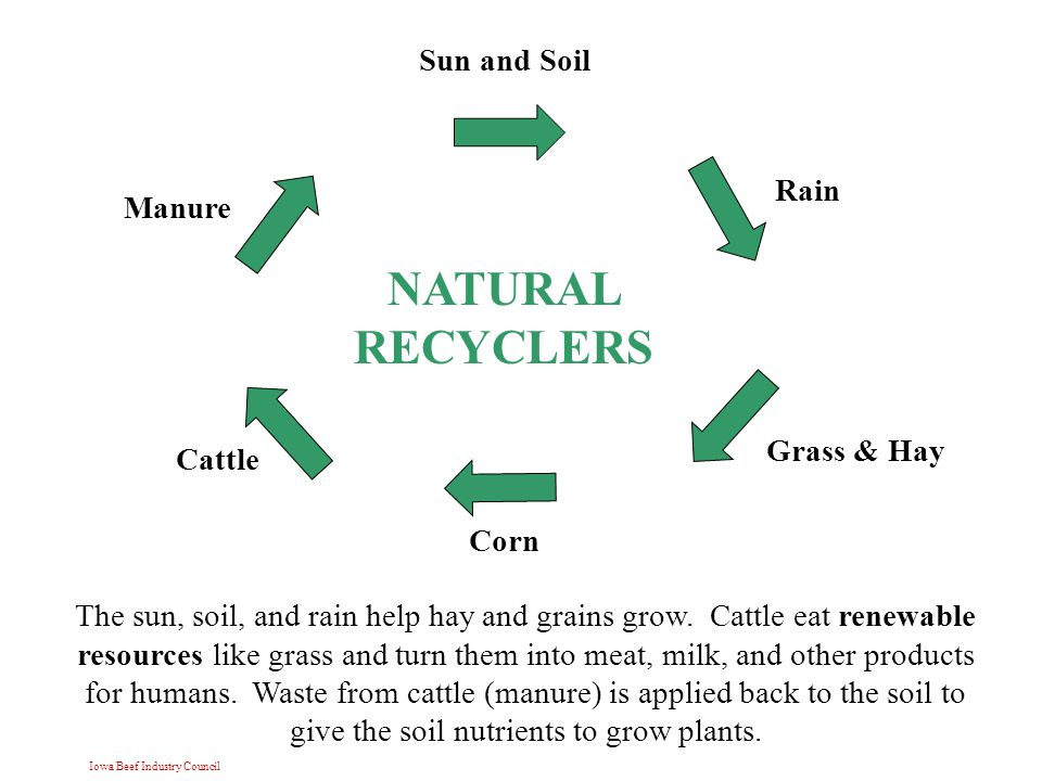 Iowa Beef Industry Council Sun and Soil Rain Grass & Hay Cattle Manure NATURAL RECYCLERS Corn The sun, soil, and rain help hay and grains grow.