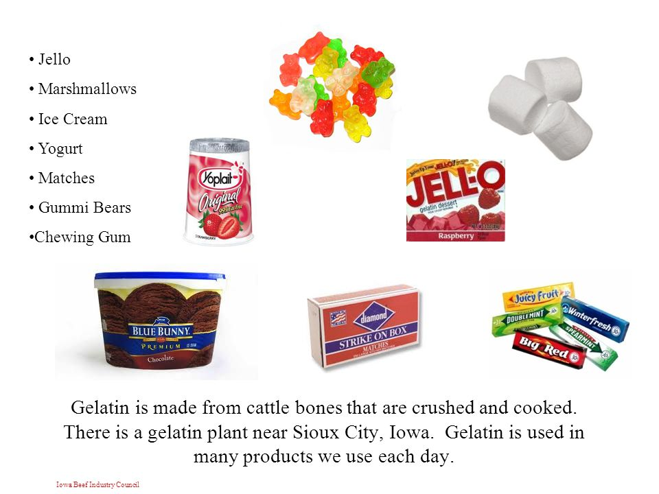 Iowa Beef Industry Council Gelatin is made from cattle bones that are crushed and cooked.