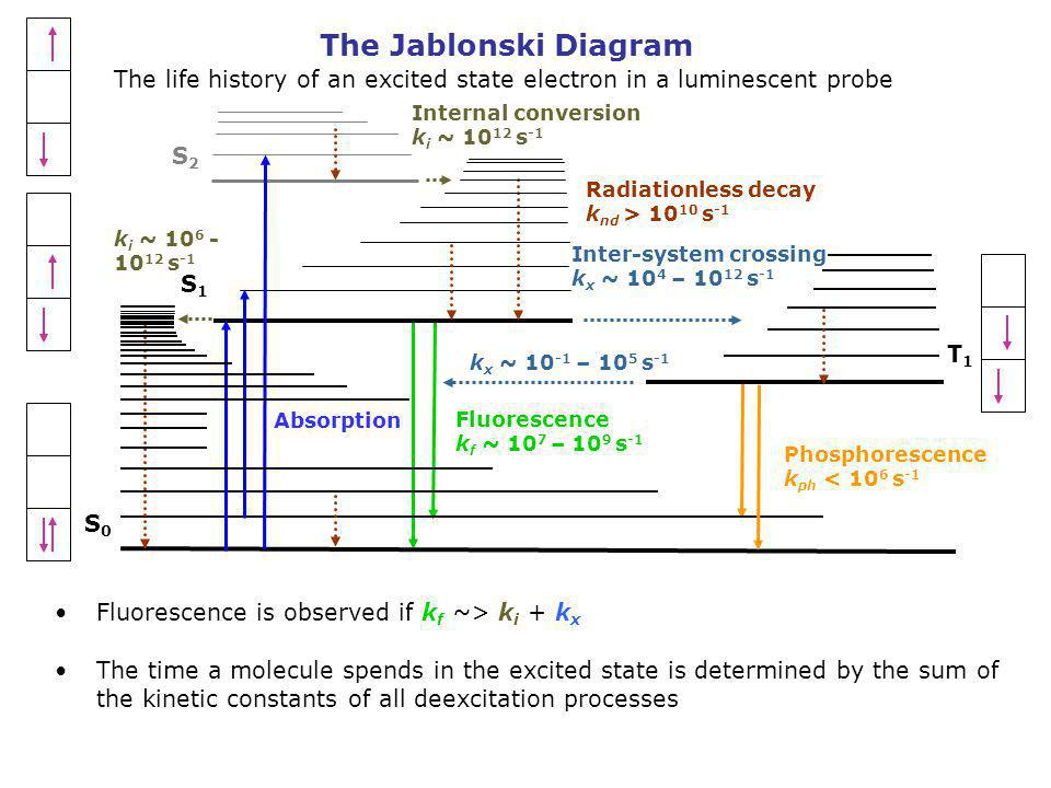 Fluorescence is observed if k f ~> k i + k x The Jablonski Diagram The life history of an excited state electron in a luminescent probe S0S0 T1T1 S2S2