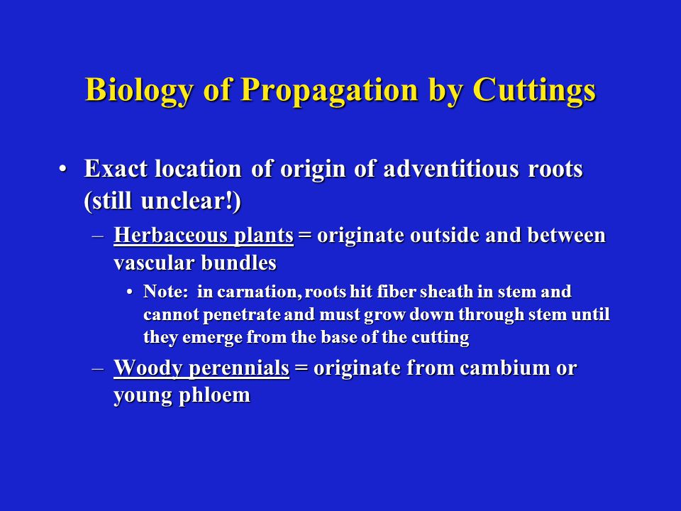 Biology of Propagation by Cuttings Exact location of origin of adventitious roots (still unclear!)Exact location of origin of adventitious roots (still unclear!) –Herbaceous plants = originate outside and between vascular bundles Note: in carnation, roots hit fiber sheath in stem and cannot penetrate and must grow down through stem until they emerge from the base of the cuttingNote: in carnation, roots hit fiber sheath in stem and cannot penetrate and must grow down through stem until they emerge from the base of the cutting –Woody perennials = originate from cambium or young phloem
