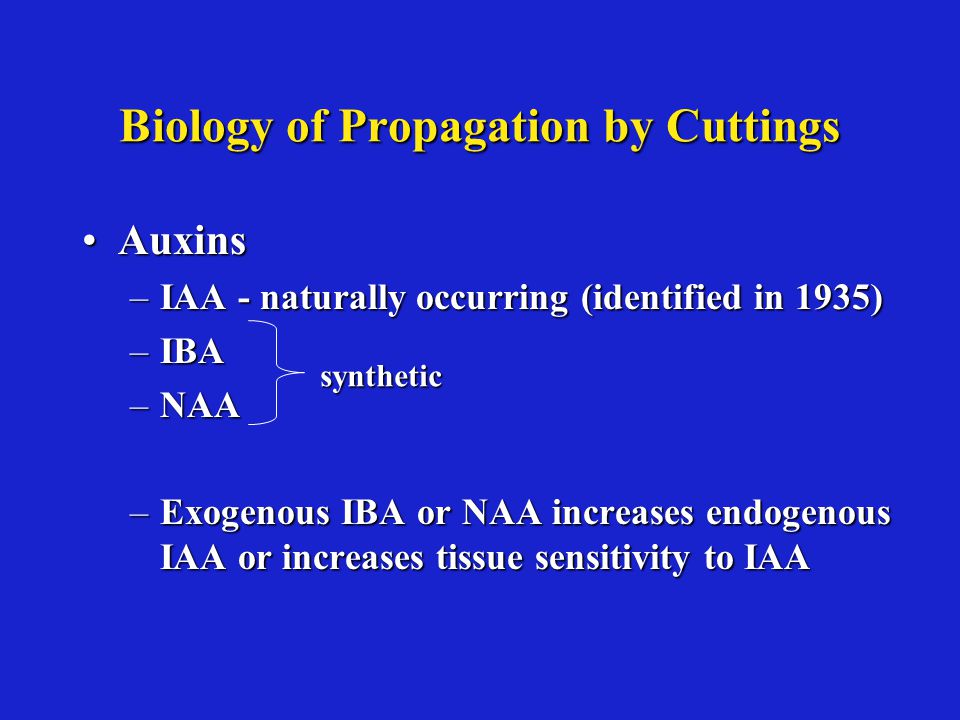 Biology of Propagation by Cuttings AuxinsAuxins –IAA - naturally occurring (identified in 1935) –IBA –NAA –Exogenous IBA or NAA increases endogenous IAA or increases tissue sensitivity to IAA synthetic