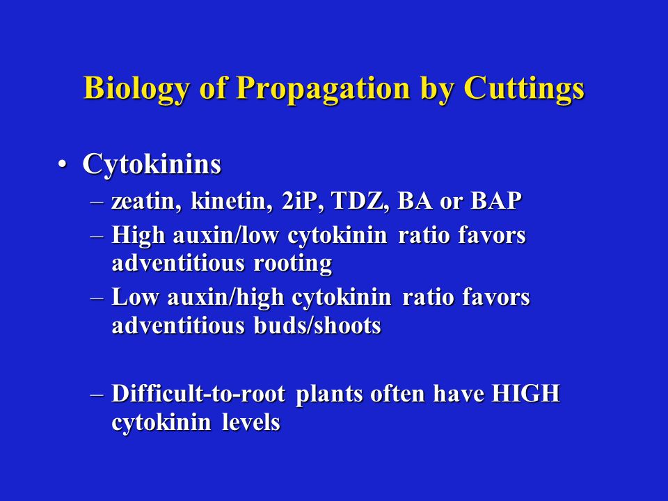 Biology of Propagation by Cuttings CytokininsCytokinins –zeatin, kinetin, 2iP, TDZ, BA or BAP –High auxin/low cytokinin ratio favors adventitious rooting –Low auxin/high cytokinin ratio favors adventitious buds/shoots –Difficult-to-root plants often have HIGH cytokinin levels