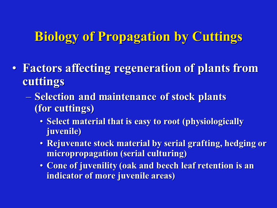 Biology of Propagation by Cuttings Factors affecting regeneration of plants from cuttingsFactors affecting regeneration of plants from cuttings –Selection and maintenance of stock plants (for cuttings) Select material that is easy to root (physiologically juvenile)Select material that is easy to root (physiologically juvenile) Rejuvenate stock material by serial grafting, hedging or micropropagation (serial culturing)Rejuvenate stock material by serial grafting, hedging or micropropagation (serial culturing) Cone of juvenility (oak and beech leaf retention is an indicator of more juvenile areas)Cone of juvenility (oak and beech leaf retention is an indicator of more juvenile areas)