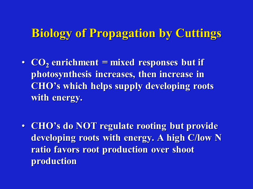 Biology of Propagation by Cuttings CO 2 enrichment = mixed responses but if photosynthesis increases, then increase in CHO's which helps supply developing roots with energy.CO 2 enrichment = mixed responses but if photosynthesis increases, then increase in CHO's which helps supply developing roots with energy.