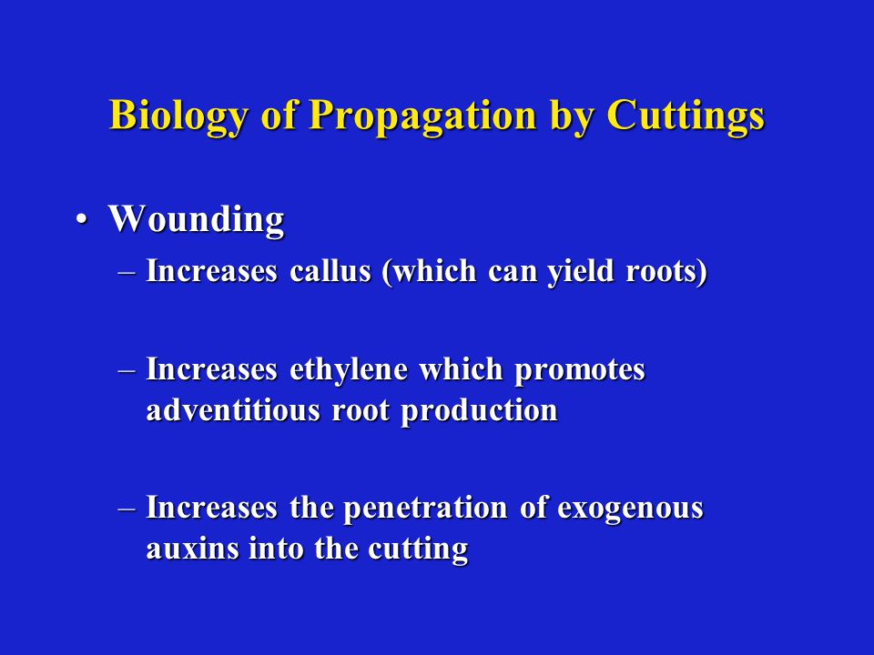 Biology of Propagation by Cuttings WoundingWounding –Increases callus (which can yield roots) –Increases ethylene which promotes adventitious root production –Increases the penetration of exogenous auxins into the cutting