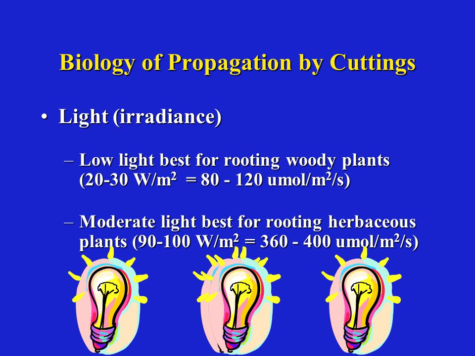 Biology of Propagation by Cuttings Light (irradiance)Light (irradiance) –Low light best for rooting woody plants (20-30 W/m 2 = 80 - 120 umol/m 2 /s) –Moderate light best for rooting herbaceous plants (90-100 W/m 2 = 360 - 400 umol/m 2 /s)